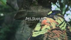 Pelikaner - Philip Emilio