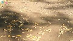 Dấu Chân Lạc Loài - Lâm Cường