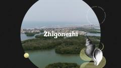 Zhigonezhi (Pseudo Video) - Carlos Vives, Ernesto Ocampo