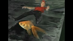 Goldfisch - Rektor Bust
