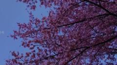 Spring Day - FilmIsland