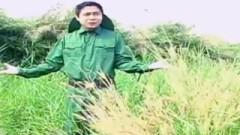 Vui Ngày Nhập Ngũ - Thái Minh Nguyễn