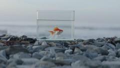 Big Fish - Vince Staples