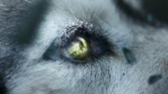 She Wolf (Falling To Pieces) - David Guetta, Sia