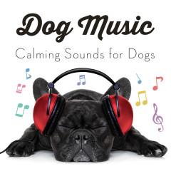 Dog Music - Calming Songs for Dogs - Sleepy Dogs