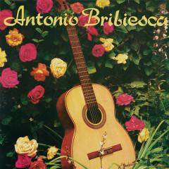 Antonio Bribiesca - Antonio Bribiesca