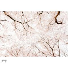Spring Wind (Single)