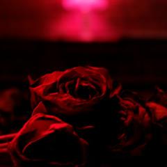 Roses - The Paper Kites