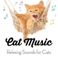 Cat Music - Relaxing Sounds for Cats - Cat Music, Cat Music Experience, Music for Cats