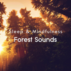 Forest Sounds (Sleep & Mindfulness) - Sleepy Times, Natural Sound Makers, Nature Recordings