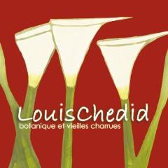 Botanique et vieilles charrues (Live) - Louis Chedid