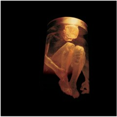 Nothing Safe - The Best Of The Box - Alice In Chains