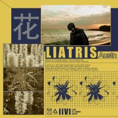 LIATRIS - Austn