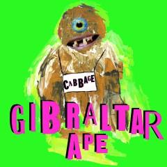 Gibraltar Ape - Cabbage
