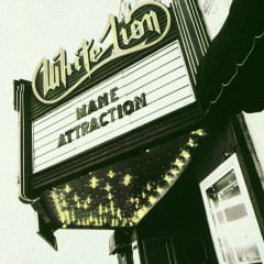 Mane Attraction - White Lion