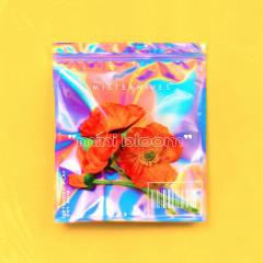 mini bloom - MisterWives