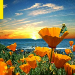 California Poppy 2 - Rexx Life Raj