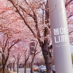 It's Spring (Single)