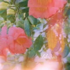 Bloom (Single)