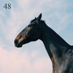 48 (Single)