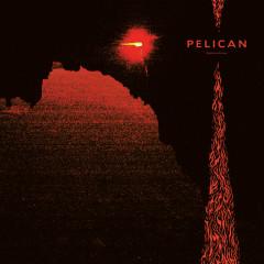 Nighttime Stories - Pelican