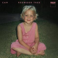 Redwood Tree - Cam