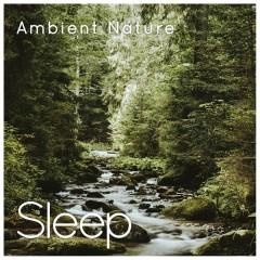 Ambient Nature (Sleep & Mindfulness) - Sleepy Times, The Sleep Specialist, Natural Sound Makers