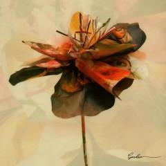 Garden (EP) - PENOMECO
