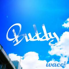 Buddy - wacci