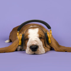 Dog Music - Calming Music for Dogs - Sleepy Dogs, Dog Music Club