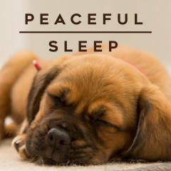 Peaceful Sleep - Various Artists