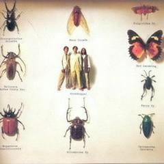 音乐昆虫/ Music Insects - Thảo Mãnh