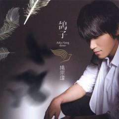鸽子/ Pigeon - Dương Tông Vĩ
