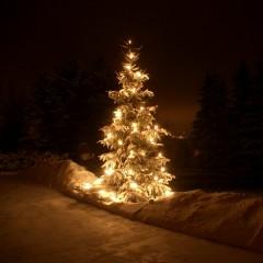 Christmas Night - Various Artists