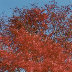 Two Seasons (Single)
