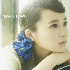 Like a flower - Sayaka Shionoya