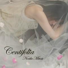 Centifolia -Noriko Mitose Art Works Best-