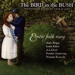Bird in the Bush - Anne Briggs