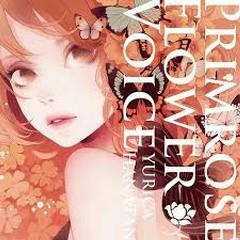Primrose Flower Voice