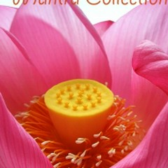Buddhist Mantra Collection