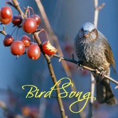 Melody Of Forest - Bird Song
