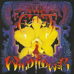 Wild Flower - The Cult