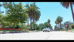 Palm Tree - Chancellor, B-Free