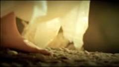 万物生 / Vạn Sinh Vật - Tát Đỉnh Đỉnh