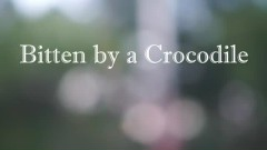 Dream Of Being Bitten By A Crocodile - Sung Nockwon