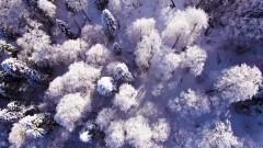 Snow Flower - HearIM