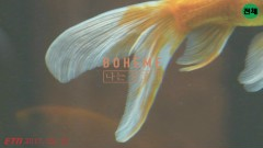 I'm A Fish - Boheme
