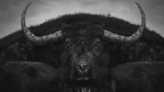 Numb Bears (Lyric Video) - Of Monsters And Men