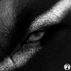 Ulven (Single)