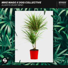 Always On My Mind (Single) - Mike Mago, Dog Collective
